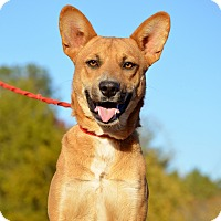 Adopt A Pet :: Shelton - Washington, GA