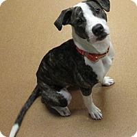 Adopt A Pet :: Rhea - Norwalk, CT