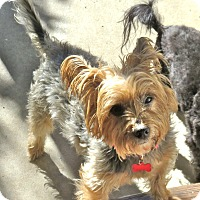 Adopt A Pet :: Poppy - Los Angeles, CA