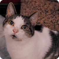 Adopt A Pet :: Skittles - Winchendon, MA