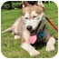 Photo 2 - Husky Mix Dog for adoption in Vancouver, British Columbia - Alaska - Pending