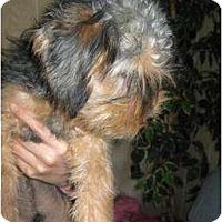 Adopt A Pet :: Chandler - Antioch, IL