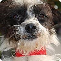 Adopt A Pet :: Quincy in Houston - Houston, TX