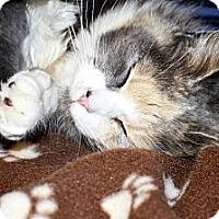 Adopt A Pet :: Samantha - Xenia, OH