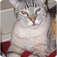 Adopt A Pet :: Sultan - Mesa, AZ