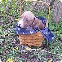 Adopt A Pet :: Male # 2 - Roaring Spring, PA