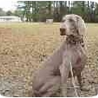 Adopt A Pet :: Holly  **ADOPTED** - Eustis, FL