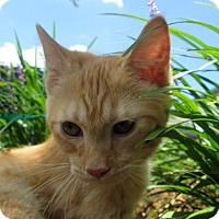 Adopt A Pet :: Keiko - Gadsden, AL