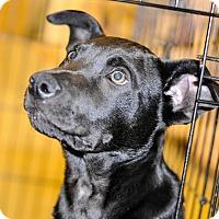 Adopt A Pet :: Blaze - Gainesville, FL