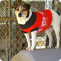 Adopt A Pet :: Mick - Nashville, GA