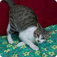 Adopt A Pet :: Poomba - Muskegon, MI