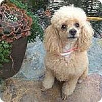 Adopt A Pet :: Kasey - Irvine, CA