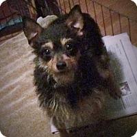 Adopt A Pet :: Zoey - Santa Ana, CA