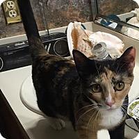 Adopt A Pet :: Ying Yang - Spring, TX