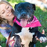Adopt A Pet :: Adorable Josie-5 VIDEOS - Burbank, CA