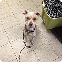 Adopt A Pet :: Olga - Cleveland, OH