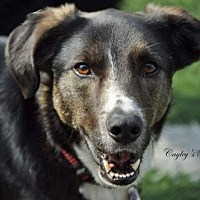 Adopt A Pet :: Bear - Evansville, IN