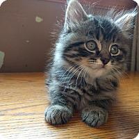 Adopt A Pet :: Fluffy - Sparta, NJ