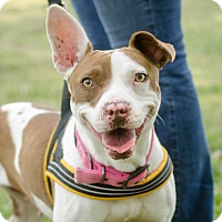 Adopt A Pet :: Millie - Greenwood, SC