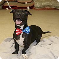 Adopt A Pet :: CASH - Phoenix, AZ