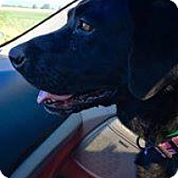 Adopt A Pet :: Beauty - Quincy, IN