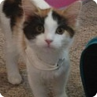 Adopt A Pet :: Patches - McHenry, IL