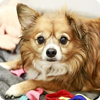 Adopt A Pet :: Sissy - Kettering, OH