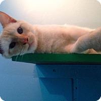 Adopt A Pet :: Batali - Huntington, WV