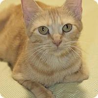 Adopt A Pet :: Prairie Dawn - Marietta, GA