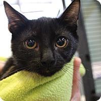 Adopt A Pet :: Wynnona - Sarasota, FL