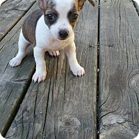 Adopt A Pet :: Mona - Rockford, IL