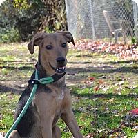 Adopt A Pet :: Dallas - Broadway, NJ
