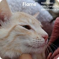 Adopt A Pet :: Flame - Temecula, CA