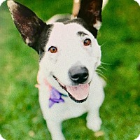 Adopt A Pet :: Jazzy - Grand Rapids, MI