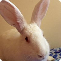 Adopt A Pet :: Sugarpie - Huntsville, AL