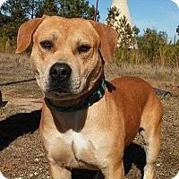 Adopt A Pet :: Roscan - Union Springs, AL