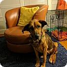 Adopt A Pet :: Lotus