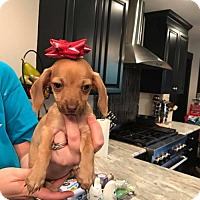 Adopt A Pet :: Aspen - Lindale, TX
