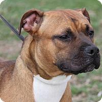 Adopt A Pet :: Rosie (Spayed) - Marietta, OH