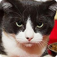Adopt A Pet :: Deeks - Irvine, CA