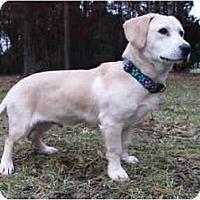 Adopt A Pet :: Pete - Mocksville, NC