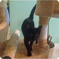 Adopt A Pet :: Thelma - Mobile, AL