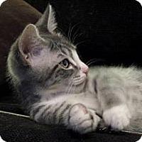 Adopt A Pet :: Doros - Davis, CA
