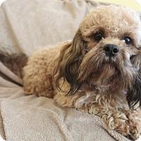 Adopt A Pet :: JoJo - Hamburg, PA