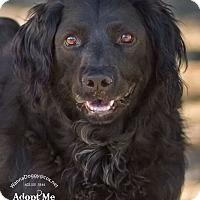 Adopt A Pet :: Hugo - Phoenix, AZ