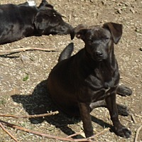 Adopt A Pet :: Puma - Columbia, KY