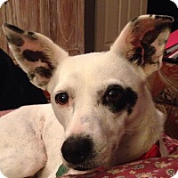 Adopt A Pet :: Lucy Lou Lou - Conway, AR