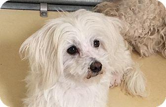 Pound To Posh Dog Rescue Portland