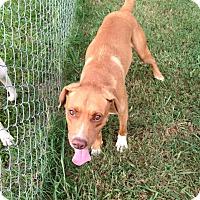 Adopt A Pet :: Max - Lebanon, CT