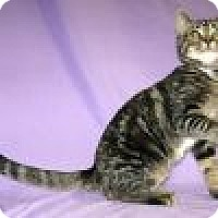 Adopt A Pet :: Dodie - Powell, OH